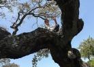 o sugli alberi
